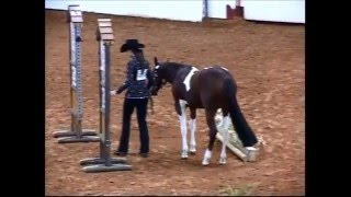 2012 APHA World Championship Show Yearling InHand Trail