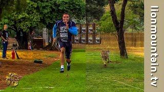 Bryan Habana VS the fastest land mammal on earth, the Cheetah!