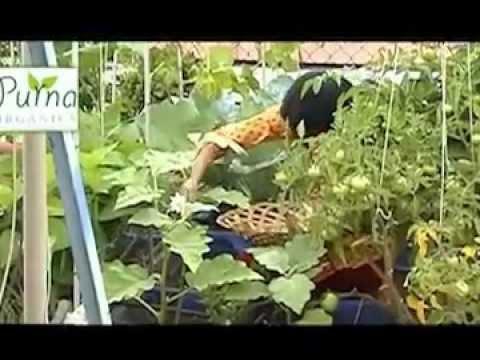 Organic Terrace Garden