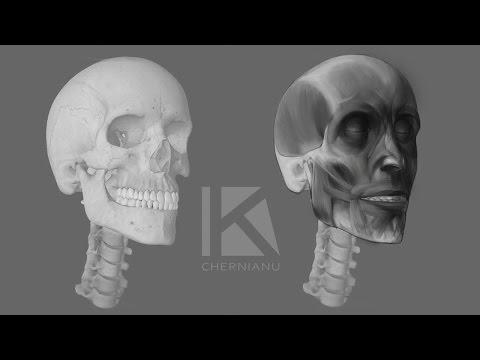 Ekorshe Head Drawing (Facial Muscles)