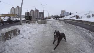 Крутые трюки с Риддиком  || дрессировка собак в Минске