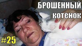 Брошенный котенок #25 Лапусик играет и выходит на снег)))