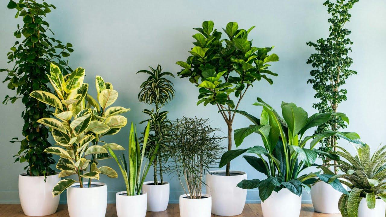 سر نجاح النباتات الداخلية فى المنزل بسهولة Youtube