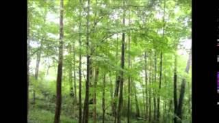 ソルフェジオ周波数852ヘルツ&静かな森  直観力が増す、ひらめきが欲しいときに  癒し&リラクゼーション thumbnail