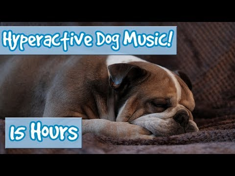 How to Calm a Hyperactive Dog! Music to Reduce Stress, Anxiety and Calm Destructive Dogs and Puppies