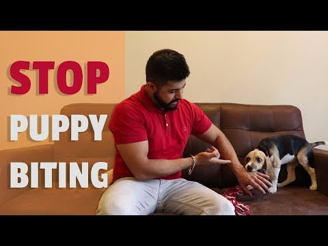 stop-puppy-biting!