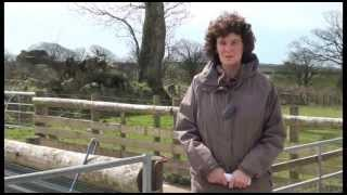 Healthy Livestock Sheep Focus Farmer: Jenny Starr - East Alsery Farm