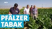 Kulinarische Entdeckungsreise Zwischen Neustadt Und Landau Exped In Die Heimat Swr Fernsehen Youtube
