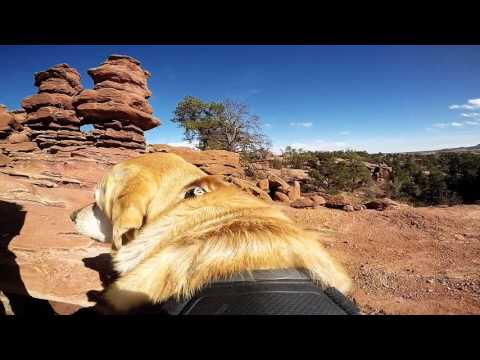 Photo Dog Jackson hiking at Garden of the Gods