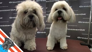 lhasa apso grooming  The sweetest lhasa