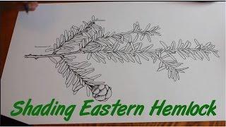Speed Drawing of an Eastern Hemlock - ink