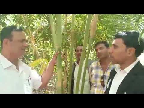 Rajshekhar Patil bamboo farming 9860209283 ,surash Jaiswal ambikapur 7000057573