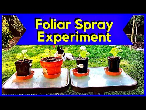 Foliar Spray - Seaweed & Fish Fertilizer (RESULTS)