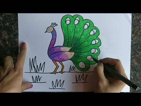 kids-art-series-birds-drawing-and-coloring-with-crayons-peacock