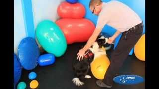 How To Preform Canine Squats Using Fitpaws Exercise Equipment