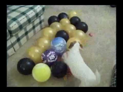Jesse vs The Balloons!!