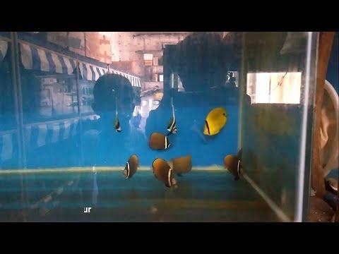 Marine Fish Aquarium tour | Kolathur | chennai