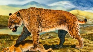 Saber Toothed Cat - Ancient Animal