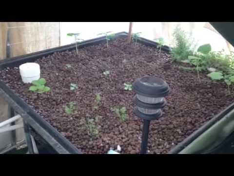 Eden AquaPonics Class Video