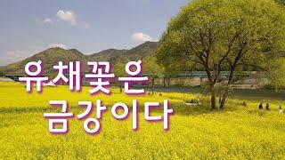 유채꽃은 금강이다 커플여행 외우세요! I 봄여행 브이로…