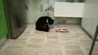 Кошка не стандартно пьет воду