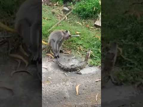 Funny Monkey Dance Video.Comedy Drama in India.Bandar ka khel.कॉमेडी बन्दर का खेल