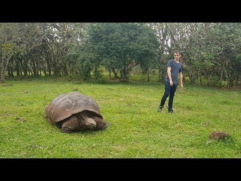 Las tortugas más