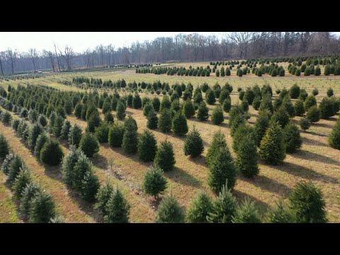 Lance Houston - Christmas Tree Shortage Could Raise Prices