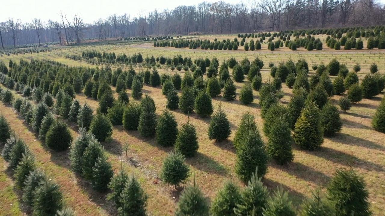 How to Keep Your Christmas Tree Fresh - YouTube
