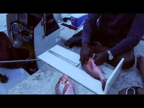Palau Fisheries