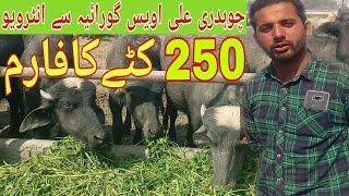 full information Katta farming /Katta farming /Katta farming in Pakistan/ Bakra Mandi in Pakistan