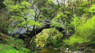 芽吹きはじめた新緑を揺らし、さわやかな風が吹き抜ける山あい。清流に...