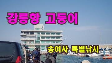 강릉항 고등어 송여사 특별낚시!!