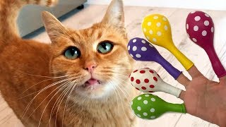 Learn Colors with Balloons and Real CAT, Finger Family Nursery Rhymes For Kids, Baby Songs