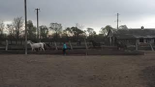 Трейлер канала|животные|кони,собаки,котики...