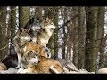 Download Ieși afară măi ciobane - Păcală [Original]