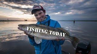 Как и какими приманками ловят судака на р. Кама - Fishing Today