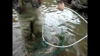 Seazoned Chicago Angler Lands Big King Salmon Drifting Spawn LyubakaVideo