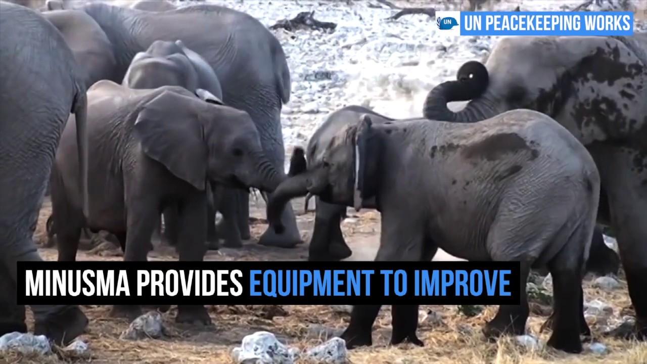 MINUSMA Elephants