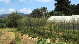 Oita, Japan Organic Farm - WWOOF Farmstay