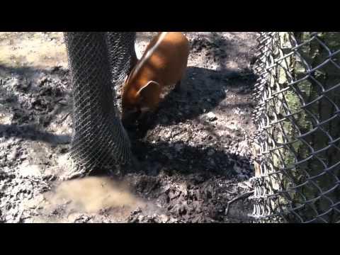 Kansas City Zoo Adventure