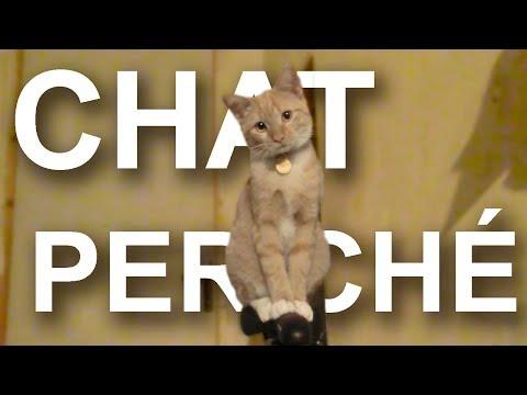 CHAT PERCHÉ - PAROLE DE CHAT