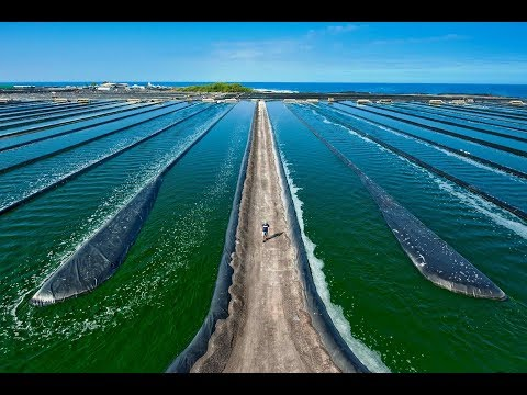 Spirulina: Harvesting/Maintaining - Great Nutrition per Watt for Self-Sufficiency