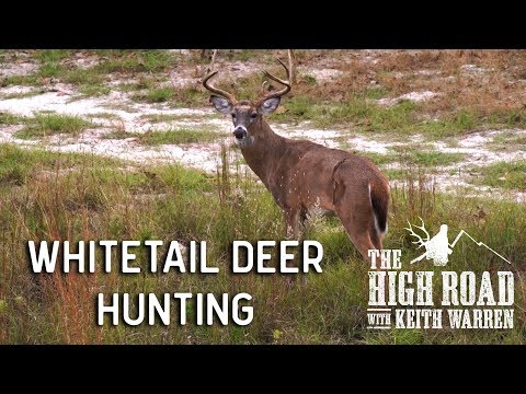 Great Whitetail Deer Hunting At The Texas Hidden Springs Ranch | The High Road With Keith Warren