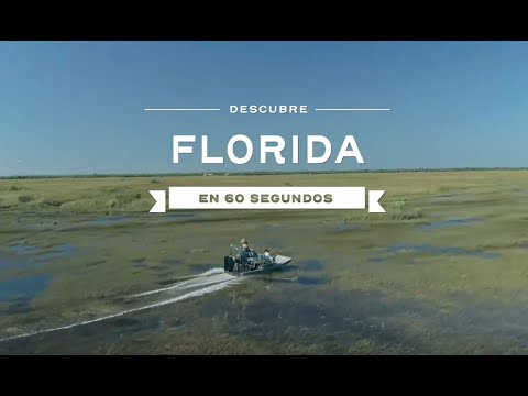 Los mejores lugares para ver e interactuar con delfines en Florida