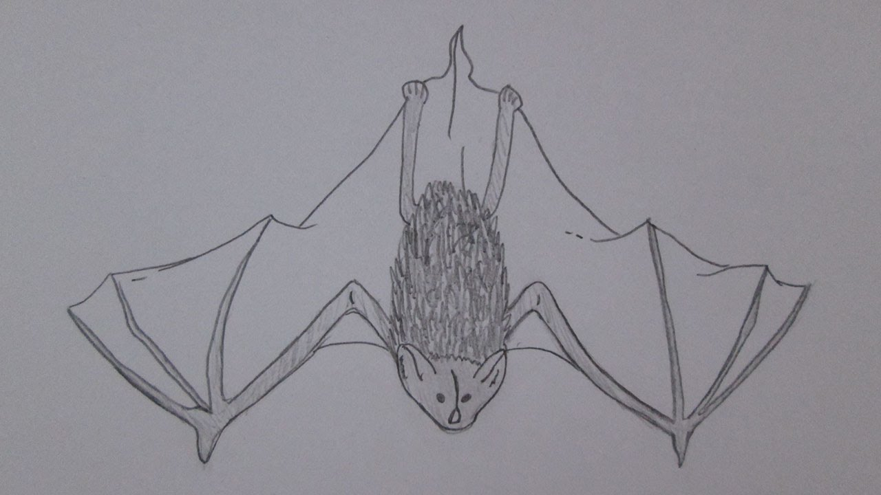 como desenhar um morcego youtube