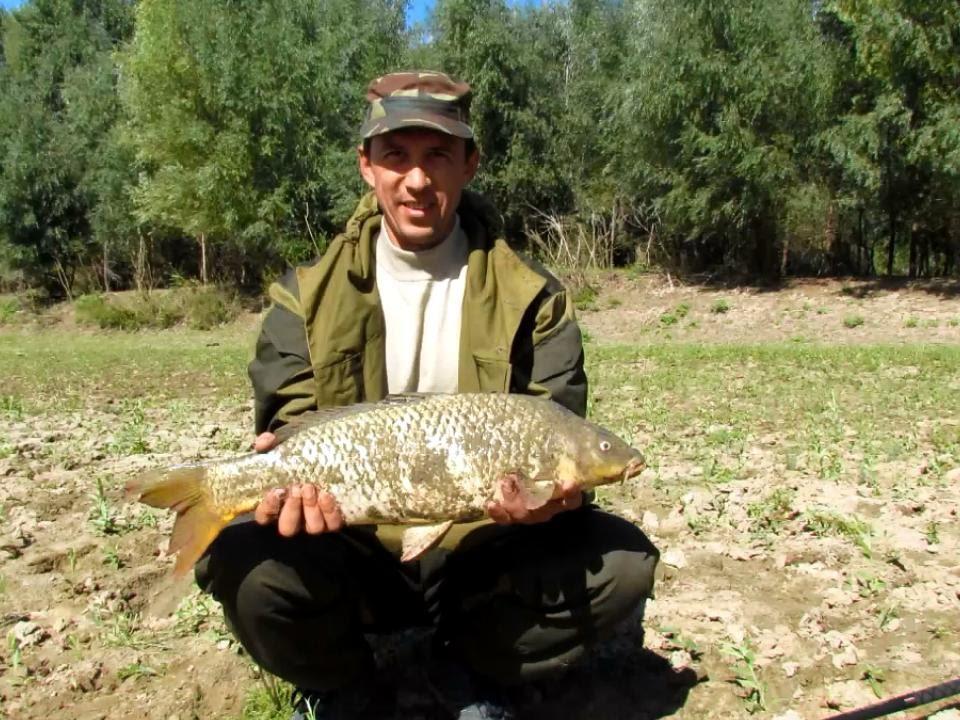 рыбалка ловля толстолобика снасти прикормка наживка для
