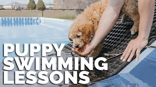 Puppy Swimming Lessons