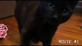 Redlettermedia but it's only Jay's cat Regan