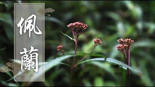 经常口臭,老中医推荐这种草,试过的都说管用 - 集草行